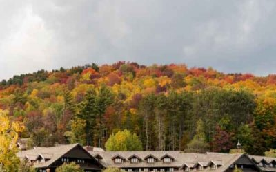 Loggers and Lagers: How Healthy Forests Help Brew a Better Pint